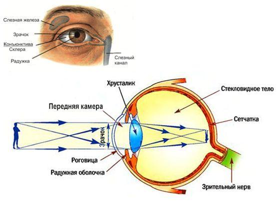 Жданов полное восстановление зрения